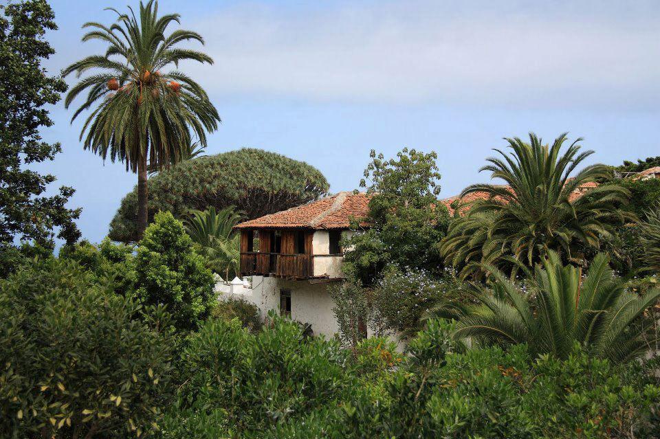 Landscapes of Tenerife - Page 6 Icod-de-los-vinos
