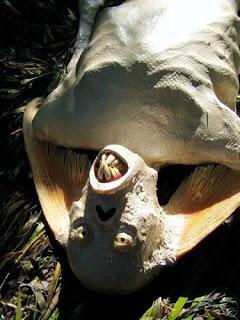 حورية البحر بين الحقيقة والخيال  Malaysia-mermaid-head-teeth