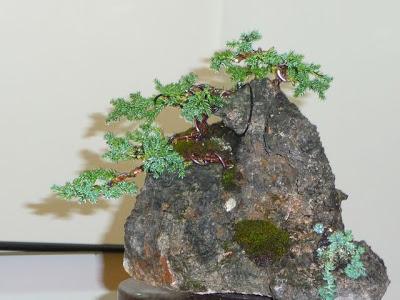 Bonsai sobre roca P1070403