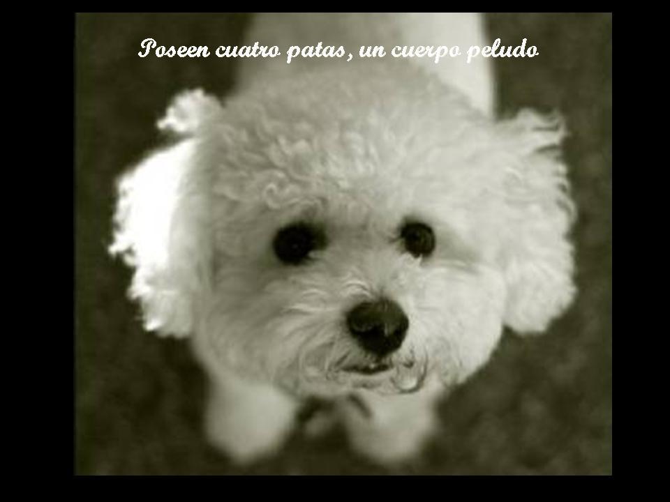 ****ANGELES DE 4 PATAS**** Diapositiva17