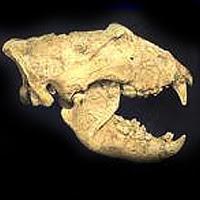 Teoria da Origem Superior das Espécies Fossil
