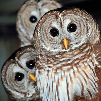 Owls!                                                                                                                                            Owls