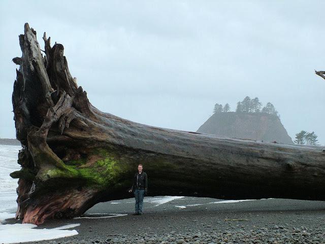 مخلوقات تعيش لأكثر من 3000عام Sequoia_6a0105371bb32c970b0134841730c5970c