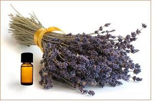 Fotografije lavande i svega,što je vezano za nju. - Page 2 Aromatherapy-lavender1