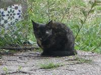 Gatos:han matado a 9, varios heridos, JAEN IMGP2378