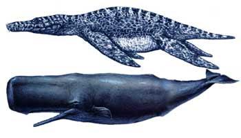 Liopleurodon VS Megalodon . La mayor batalla animal .  Liopleurodon3