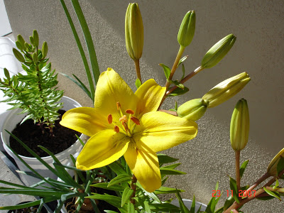 வண்ண வண்ண பூக்கள் DSC09045