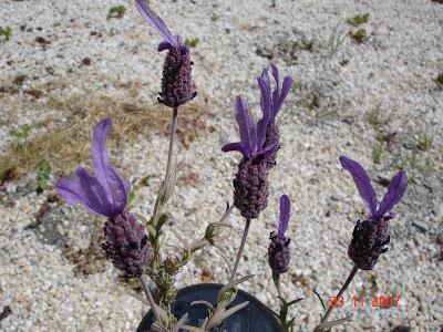 வண்ண வண்ண பூக்கள் DSC09060