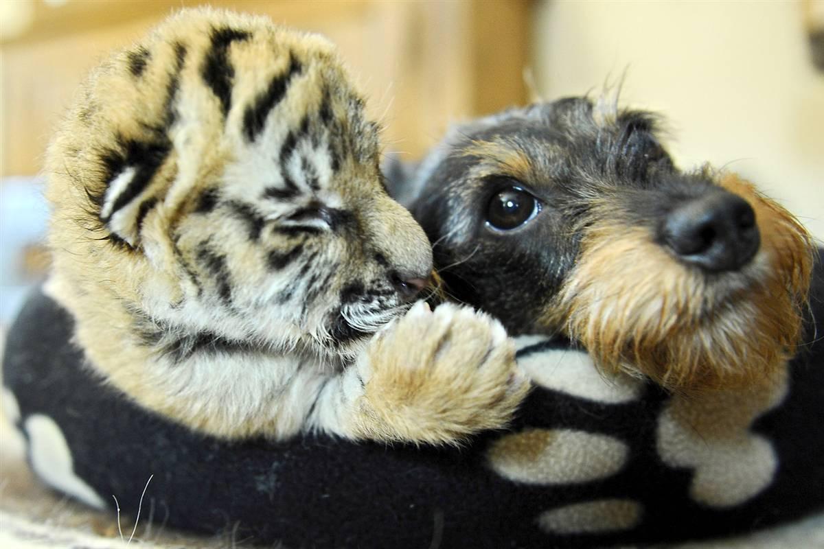 Volim te kao prijatelja, psst slika govori više od hiljadu reči Ss-091103-animal-friends-16_ss_full