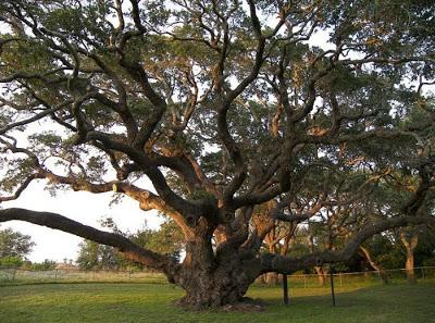 أجمل وأغرب الأشجار إطلاقا Amazing-trees-05