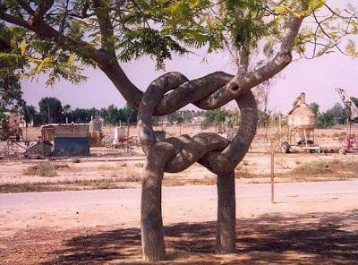 أجمل وأغرب الأشجار إطلاقا Amazing-trees-02