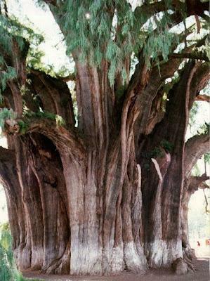 أجمل وأغرب الأشجار إطلاقا Amazing-trees-14