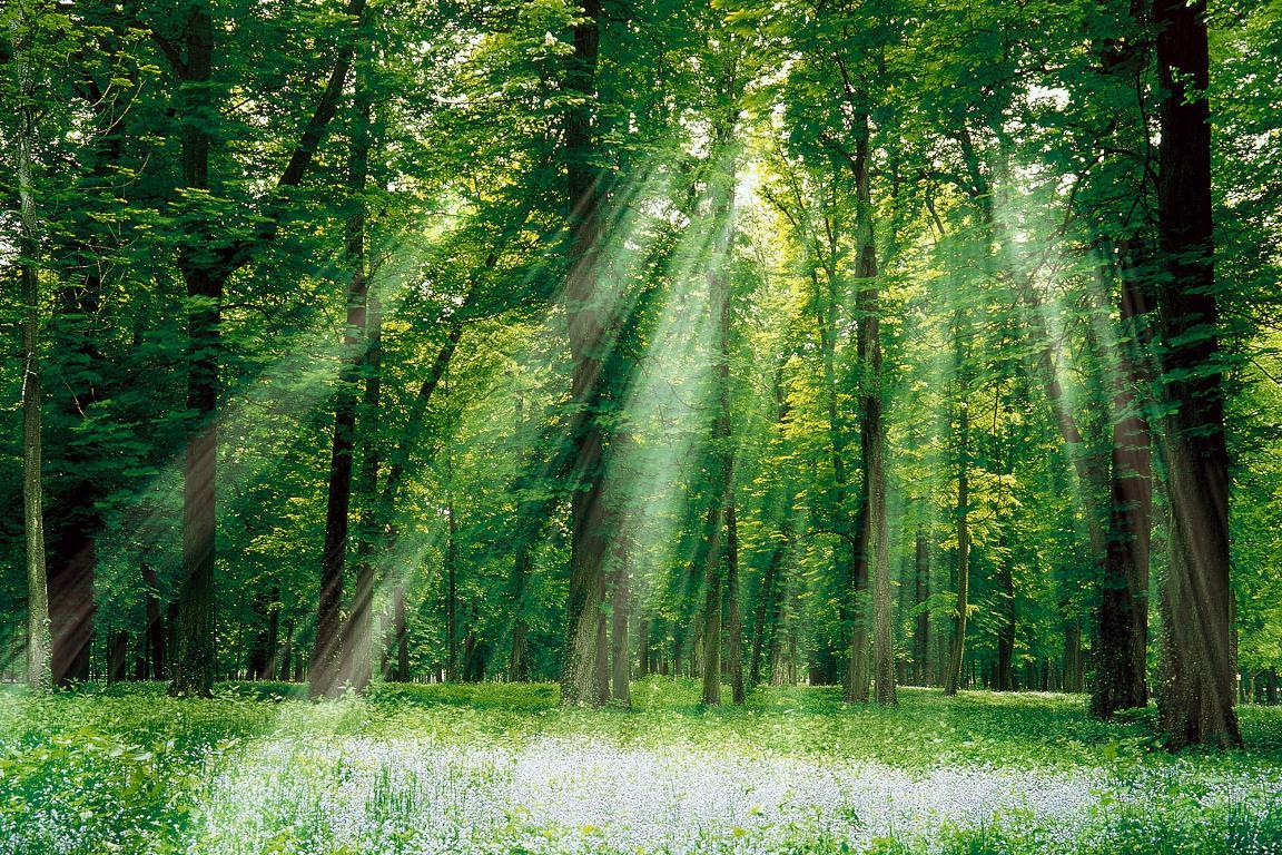 Starmz's Art Gallery SunlightForest