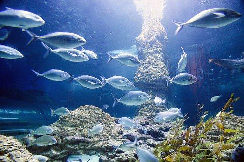 Podvodni cudesni svet 4