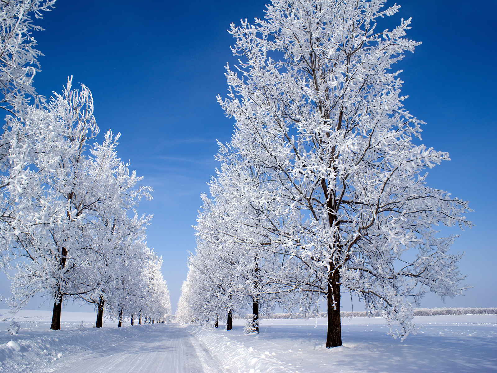 Snežne čarolije Country%2Blane%2Bwinter%2Bsnow%2Bwall%2Binkbluesky