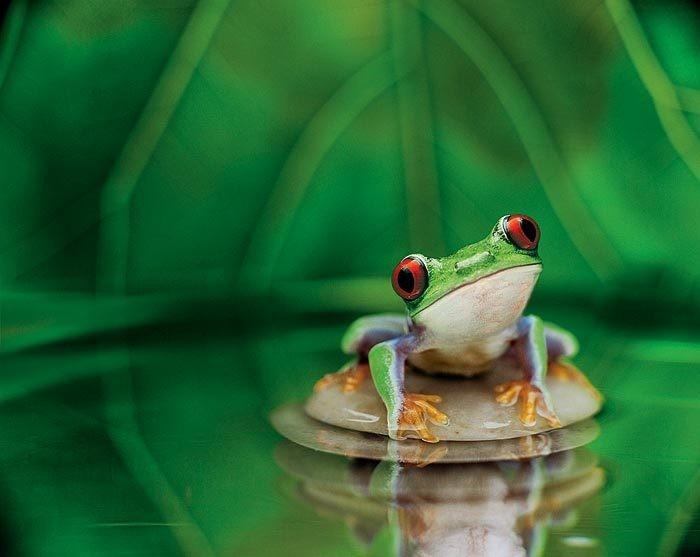 Kawaii Korner {New} - Page 2 Cute-frog