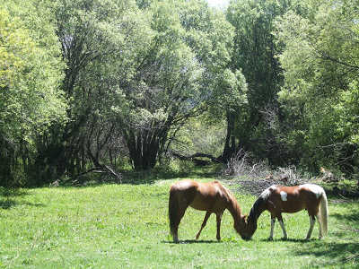 Imagenes de caballos (cualquier estacion) DSCF0546
