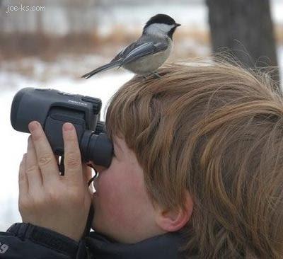 வித்தியாசமான விசித்திரங்கள் BirdWatcher