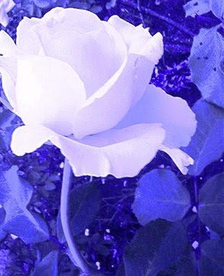 LAS HOJAS AZULES Blanca_hojas_azules