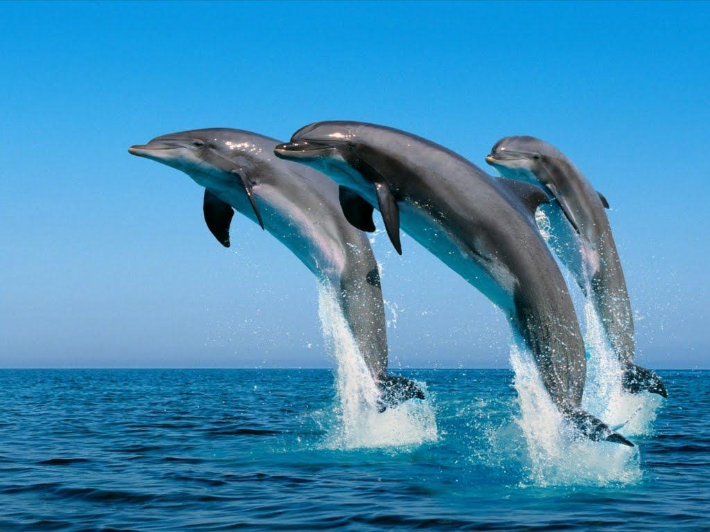 El mar azul.....la mar...sus olas Delfines-saltando-en-el-mar