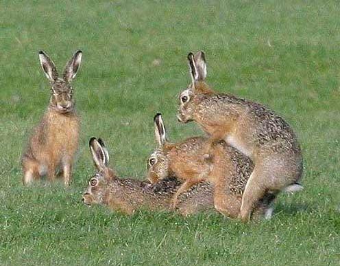 Bambi, la película más deseada Rabbits