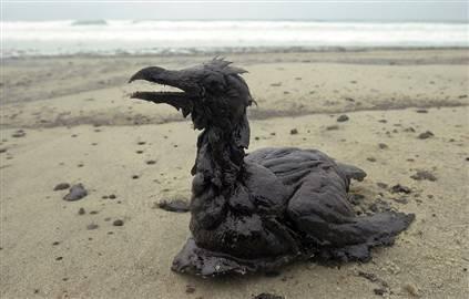 تحية ماسونية - صفحة 4 Oil-spill