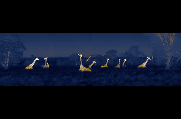 African savannah at night (Martin Dohrn) Africa_night_01