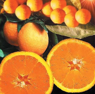 LUNES 20 DE AGOSTO DE 2012 - Por favor pasen sus datos, pálpitos y comentarios de quiniela AQUI para hacerlo más ágil. Gracias.♥ Naranja