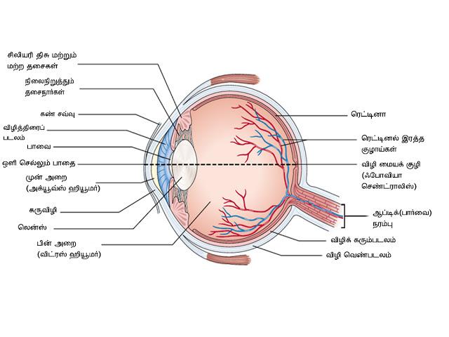 கண் - Anatomy  Eye-anatormy