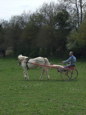 Le poney attelé... DSCF1514