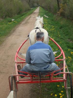 Le poney attelé... DSCF1527