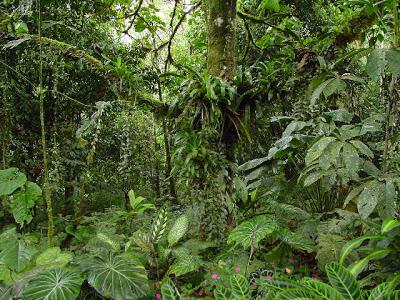 Selva Guineana Occidental. Selva