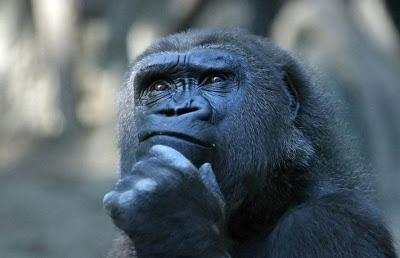 # DUVIDA CRUÉL # Gorilla-thinking