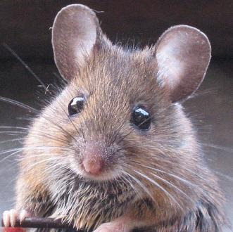 IL GOBLIN MouseCropped