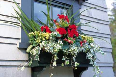 Prozori koji govore - Page 2 Window-box-flowers