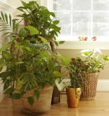 Cómo desinfectar tus plantas , trucos para limpiarlas y mantenerlas sanas 220_79225_2365786_754384
