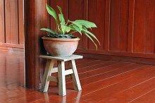 Cómo desinfectar tus plantas , trucos para limpiarlas y mantenerlas sanas 220_79225_2365787_598290