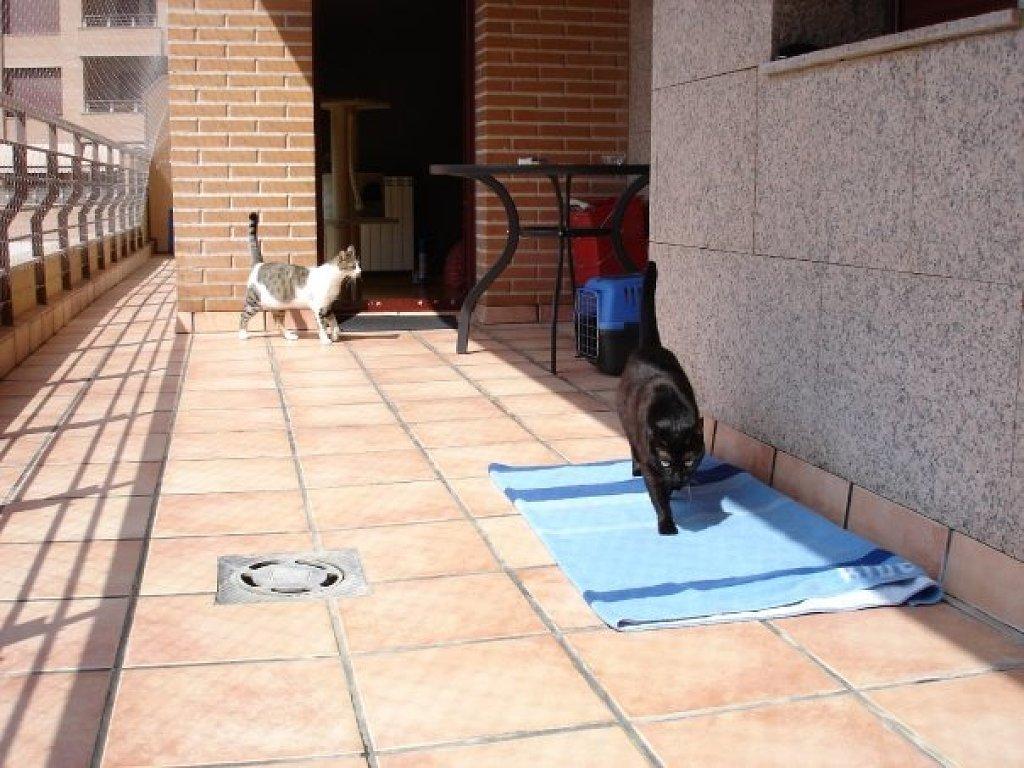 Resumen de ideas para mosquiteras y redes ventanas y balcón para gatos. Am_59044_3141121_892243
