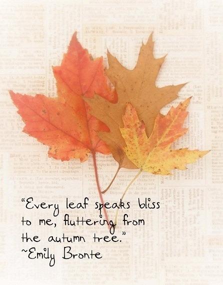 ... Y caen las hojas, llega ....¡¡¡ EL Otoño !!! - Página 10 Tumblr_msv0iy9j371rdvg6qo1_500