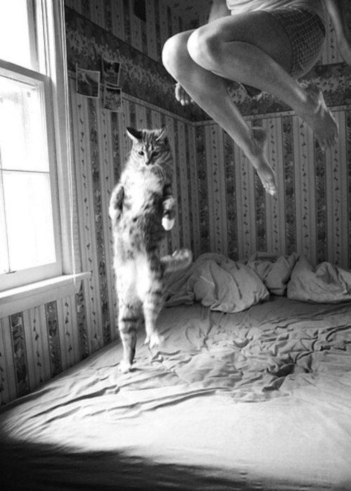 Lidojošie kaķi Tumblr_mgxw8uUyE11ri98f1o1_500
