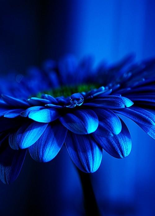Plavo kao ... - Page 7 Tumblr_ll0zvmusgJ1qad8alo1_500