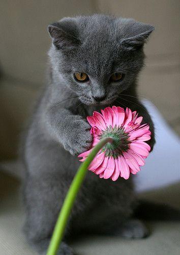 Samo jedan cvet Tumblr_lm40mvdAR71qzk6lho1_400