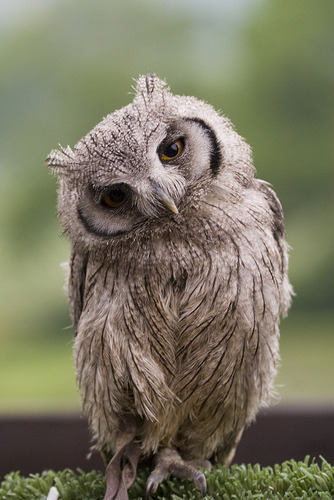 Owls!                                                                                                                                            Tumblr_lss4oh4W0X1ql4yaxo1_400