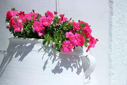 ~Floriiii~ - Page 8 Tumblr_lz0002Z2fH1qabct4o1_500