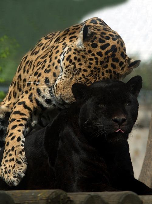Animale... - Page 16 Tumblr_m35ql78rNO1qm8fzgo1_500