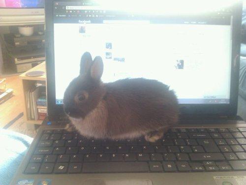 Laptop`uri Tumblr_m37alwfbnS1r2o9zpo1_500