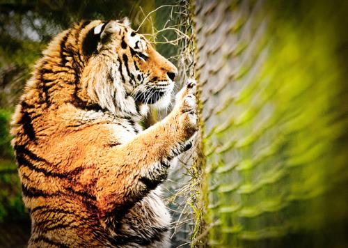 Animale... - Page 15 Tumblr_m3op59Ljei1rohhvpo1_500