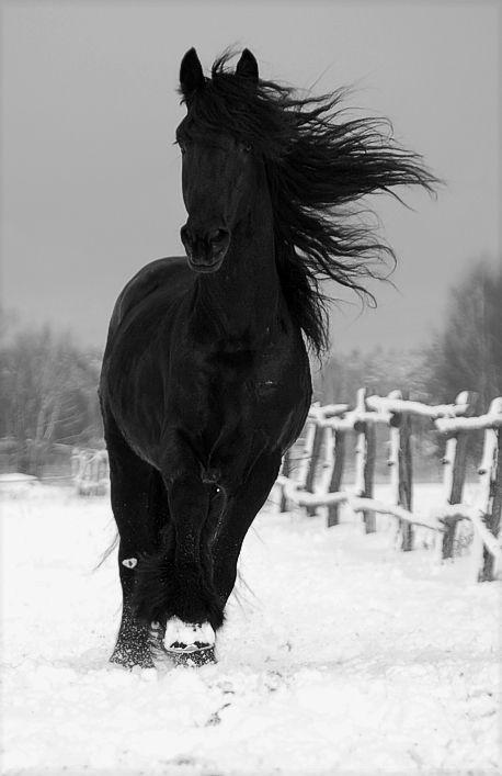 Konji Tumblr_m438q6JiTa1qjqyo8o1_500