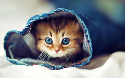 Animale... - Page 17 Tumblr_m8lun2RU431rw2c6fo1_500