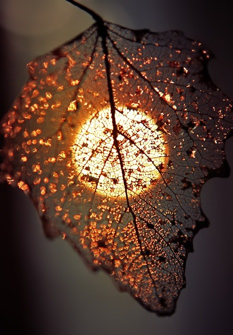 Empieza el otoño. - Página 3 Tumblr_mdwmjq1Ezo1ro7jdfo1_500